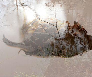URSULA NEUBAUER | Symbiosis : The signature of all things